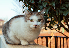 stray cat (Christine_S.) Tags: japan outdoors meow neko chat canon eos mirrorless m5 portrait