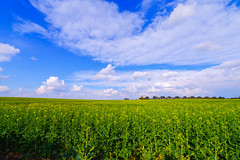 fields of yellow and green (Paul Wrights Reserved) Tags: spring rapeseed rapeseedfield sky skyscape skyscapes clouds colour colours colourful vibrant field countryside landscape landscapes landscapephotography