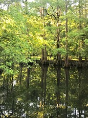 Cypress Mirror (Trudy -) Tags: calm peaceful nature pond tledoux reflection cypress trees tree
