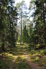 This is not the end of the road (DameBoudicca) Tags: sweden sverige schweden suecia suède svezia スウェーデン småland forest woods skog wald bosque fôret foresta 森林