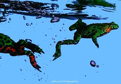 Frogs (jackfre 2) Tags: animals frogs water aquarium antwerp belgium