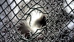 Netz vom Fussballtor (dl1ydn) Tags: dl1ydn tor netz fussballtor defekt loch frost raureif winter net goal altglas manual manuell vintage voigtländer ultron 50mmf2