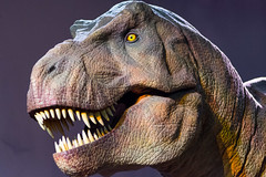 Tyrannosaurus - Natural History Museum London (nickstone333) Tags: naturalhistorymuseum london museum tyrannosaurus trex dinosaur atxm100afprod tokinaaf100mmf28macro nikon nikond7100 d7100