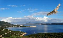 Sorvolando il mare.. (antonè) Tags: portoconte alghero falco rivieradelcorallo sardegna antonè panorama nuvole riflesso sea water sky landscape seascape