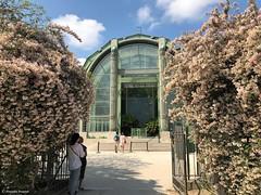 serre-jardin© (alexandrarougeron) Tags: photo alexandra rougeron urbain ville paris