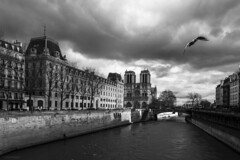 Spread Your Wings (sdupimages) Tags: noirblanc blackwhite noiretblanc bird oiseau tour tower cathedrale ciel sky eau water river seine paris monochrome bw nb nuages clouds mouette seagul cityscape paysage urbain urban rue street
