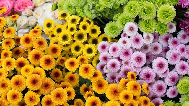 Обои цветы, желтые, зеленые, оранжевые, много, разные, сиреневые, букеты, ассорти картинки на рабочий стол, раздел цветы - скачать