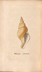 n189_w1150 (BioDivLibrary) Tags: greatbritain mollusks museumsvictoria bhl:page=57640398 dc:identifier=httpsbiodiversitylibraryorgpage57640398 conchologicaldictionary conchology shells britishisles britishislands williamturton british