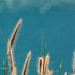 Grass by the sea                  XOKA0198bs