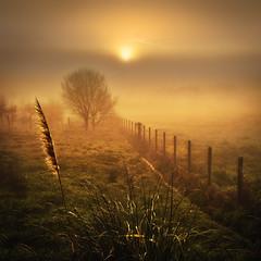 Luou (Noel F.) Tags: sony a7iii a7 iii luou teo galiza galicia neboa fog mist mencer sunrise fe 24 14 gm