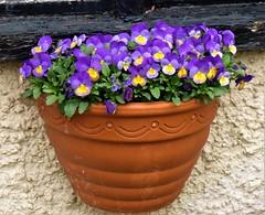 P1080586 (KENS PHOTOS2010) Tags: flowers gardens gardening