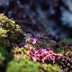 Tiny Landscape 15. Hot Springs, Arkansas. thumbnail