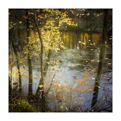 River Ure (gerainte1) Tags: hasselblad501 provia100 film colour yorkshire riverure autumn trees water reflections
