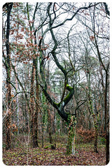 Dancing Tree (nickyt739) Tags: tree forest bare winter germany coswig nikon dancing dslr fx d750