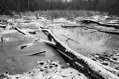 Pond (BRB1952) Tags: michigan mayburystatepark