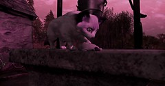 Prey. (Seraphina Juliesse) Tags: cat mouse bike farmhouse trees prey well shadows