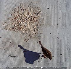 7PTDC0866 (Pep Companyó - Barraló) Tags: ocells pajaros aves aus ornitologia animals fauna natura puigreig bergueda barcelona catalunya josep companyo barralo