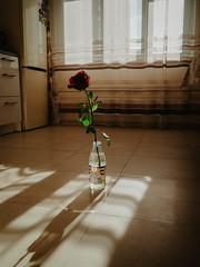 kitchen aesthetics (yeahelf) Tags: kitchen aesthetics sun magic buildings evening olympus olympuspen model flower light shadow mirror