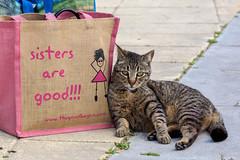 sisters are good !!! (jameshjschwarz) Tags: 2840150mm andalusien cat chat gatto katze mft olympusem1 conildelafrontera provinzcádiz spanien es