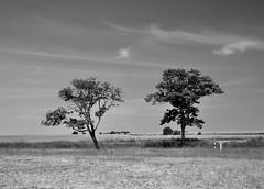 - 2 - (Lichtabfall) Tags: schwarzweiss monochrome poel bäume trees inselpoel ostseeinselpoel sw bw blackwhite blackandwhite einfarbig landschaft landscape kirchdorf mecklenburgvorpommern