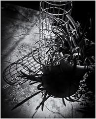 Lomographyhy (Black and White Fine Art) Tags: lomography lomo holga 120n kodakbw400cnexp2007 chromogenicfilmdevelopedind76 expiredfilm2007 laslomas plasticcamera camaraplastica toycamera camaradejuguete bn bw niksilverefexpro2 lightroom3