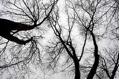 1PRO_1891 (Radu Pavel) Tags: radu radupavel pavel fotononstop cosmos ©radupavelallrightsreserved ©radupavelallerechtevorbehalten ©radupaveltodoslosderechosreservados ©radupavel版権所有 nature natur naturaleza 自然 tree baum árbol 木 outdoor alairelibre imfreien ルーマニア world welt mundo 世界 winter invierno 冬 neural 神経の 2019 abstract abstrakt abstracto 抽象