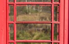 Telephone box with a message (ArtGordon1) Tags: davegordon davidgordon daveartgordon davidagordon daveagordon artgordon1 london england uk february 2019 winter queenelizabetholympicpark telephonebox art