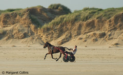 Photo of Pony Trotting 2