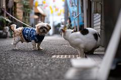 犬猫 (fumi*23) Tags: ilce7rm3 sony street sel85f18 a7r3 animal alley dog katze gato cat chat neko inu emount 犬 猫 路地 ソニー bokeh