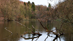 Tree in the lake (bdg-photography) Tags: trees tree water lake forest nature pond ducks bird naturephotography natur