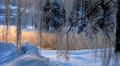 Winter Dawn (C-Aida) Tags: winter dawn light nature snow sunrise europe earth zen morning cold landscape water world flickrology