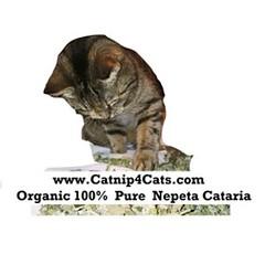 www.catnip4cats.com #cats #Caturday #catsofinstagram #catsoftwitteroninstagram (RetrosheepCharms) Tags: retrosheep handmade gifts deals giftideas