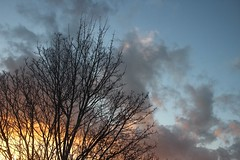 South London sunset (NovemberAlex) Tags: sunset london clouds colour brixton silhouettes trees