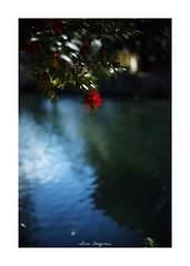 2019/1/26 - 5/15 photo by shin ikegami. - SONY ILCE‑7M2 / Voigtlander NOKTON CLASSIC 40mm f1.4 SC VM (shin ikegami) Tags: asia sony ilce7m2 sonyilce7m2 s7ii 40mm voigtlander nokton nokton40mmf14sc tokyo photo photographer 単焦点 iso800 ndfilter light shadow 自然 nature 玉ボケ bokeh depthoffield naturephotography art photography japan earth