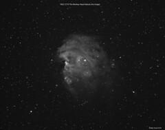 NGC 2174 The Monkey Head Nebula (Ralph Smyth) Tags: monkeynebula nebula ngc2174 ngc orion ha zwo1600mm zwo