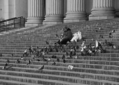 Seul (AlainC3) Tags: homme man personne people newyork nyc usa noirblanc nb blackwhite bw nikond7500 pigeon oiseaux birds pidgeon marches escalier stairs colonne