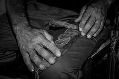 Cuba: Hand Made Cigar! (degiovanni76) Tags: verde casa case cuba cubane streetphotography street streetphoto streetphotographer streetphotocuba streetphotographycuba foto strada calle callejera campesino contadino horse caballo cavallo d50 nikon cubano farmer prato campo lawn erba hierba herb grass manos hands mani mano hand cigar sigaro puro tobaco tabaco tabacco