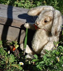Bunny in the Garden (Emily1957) Tags: steiff bunny shovel garden light naturallight nikond40 nikon kitlens toys toy spring