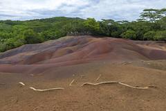 Seven Colored Earth, Chamarel Mauritius / Семицветные пески, Шамарель Маврикий (dmilokt) Tags: природа nature пейзаж landscape песок sand цветок flower дерево tree цвет color colour dmilokt