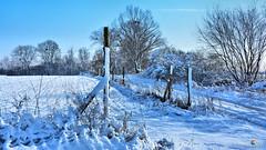The snow land (Szymon Karkowski) Tags: outdoor winter snow nature tree trees road fence field bushes blue sky landscape silesian voivodeship gliwice poland nikon d7100