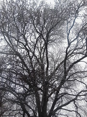 DSCN5348 (tombrewster6154) Tags: overcast sky greensboro nc westover church trees barren glazed over ice winter storm midjanuary 2019 digital camera picture photograph silhouettes late afternoon parking lot looking up