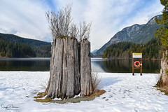 Visit back to: Buntzen Lake, Anmore, BC (SonjaPetersonPh♡tography) Tags: buntzenlake anmore portmoody bc britishcolumbia canada nikon nikond5300 landscape waterscape lake water recreation fishing kayaking paddleboarding boatshed floatingwharf wharf snow winter 2019 serene scenery scenic forest trees trails
