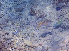 DCL March 2019 Tortola Underwater-65-2.jpg (Rhinodad) Tags: disneycruise disneyfantasy tuesday underwater 2019 dcl tortola britishvirginislands vg