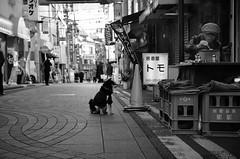Faithful dog (reiko_robinami) Tags: streetphotography street outdoors dog monochrome blackandwhite urban candid yokohama japan