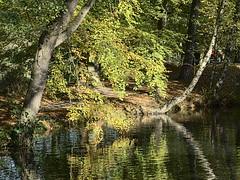 Höpkens-Ruh_e-m10_101A316037 (Torben*) Tags: rawtherapee olympusomdem10 sigma60mmf28dn bremen oberneuland höpkensruh park see lake trees bäume leaves blätter reflection reflexion