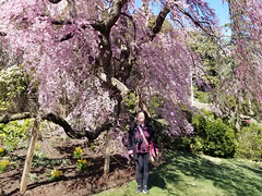2019-03-31 14.51.27 (littlereview) Tags: dc littlereview 2019 nationalcathedral church flower family personal garden spring blog
