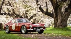 1961 Ferrari 250 GT Berlinetta SWB (chumako@bellsouth.net) Tags: scapes gaming granturismo gtsport ps4pro ps4 playstation italian cars vintage scuderia berlinetta 250gt ferrari