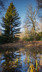 With and Without (Adin Roberts) Tags: pond trees conifer oak ansty sussex