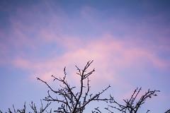 'flaccid' set (o6227) Tags: sky skies cloud clouds landscape snow blue cyan purple violet amateur