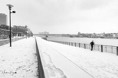 Rheinboulevard (markus.bank) Tags: schnee köln rheinboulevard 2019 deutz lightroom bilddestages rhein flus river cologne snow bw blackwhite
